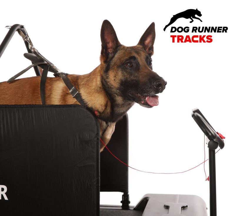 Dog Runner Tracks